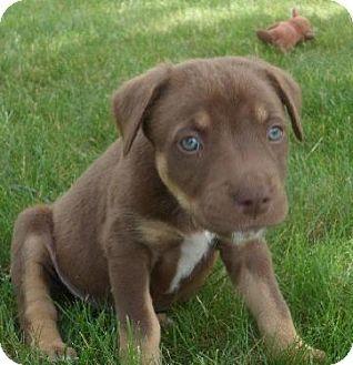 Pin On Adoptable Dogs Michigan
