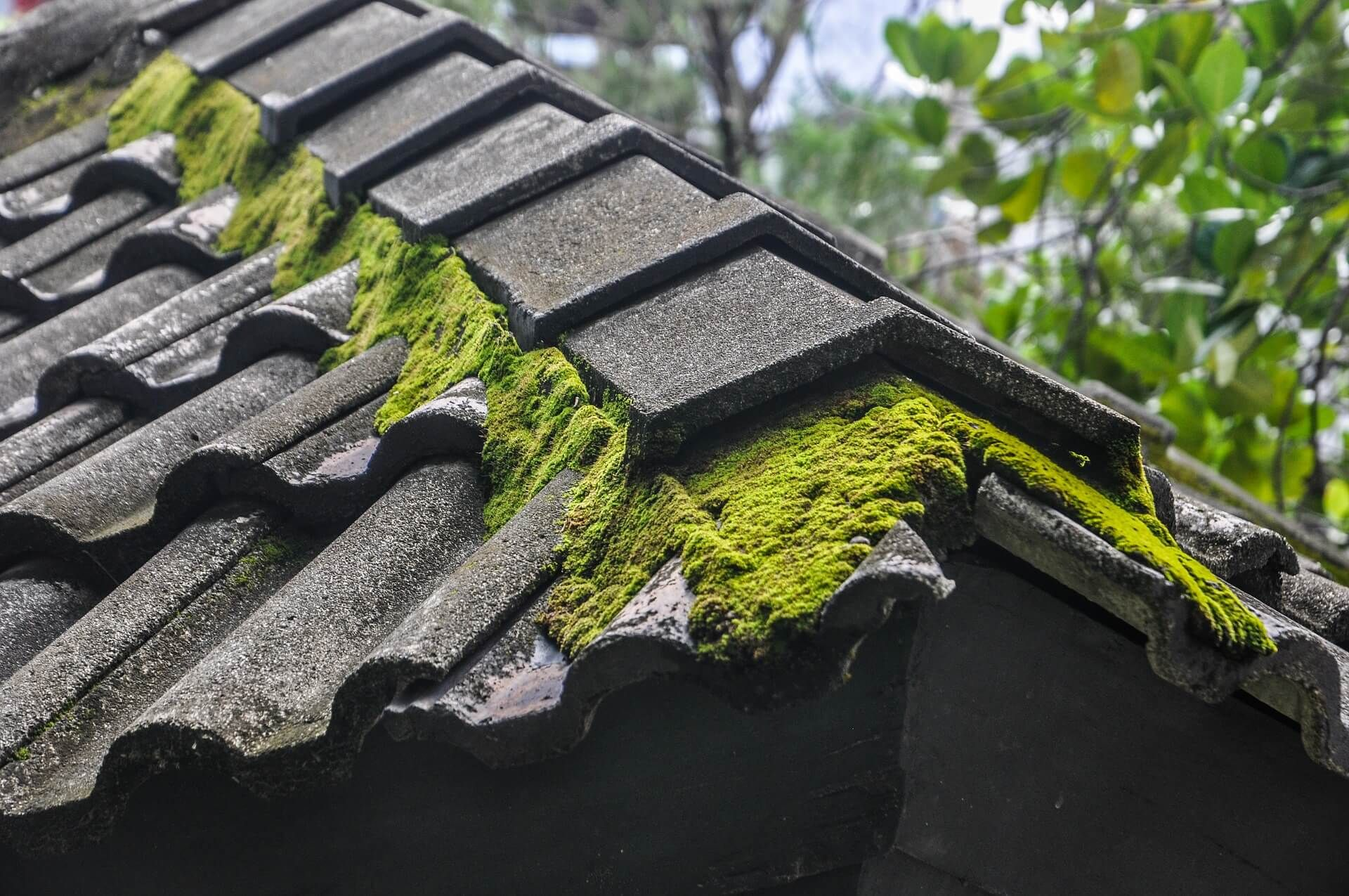 How to Tackle Unsightly Moss on Your Roof Asphalt roof