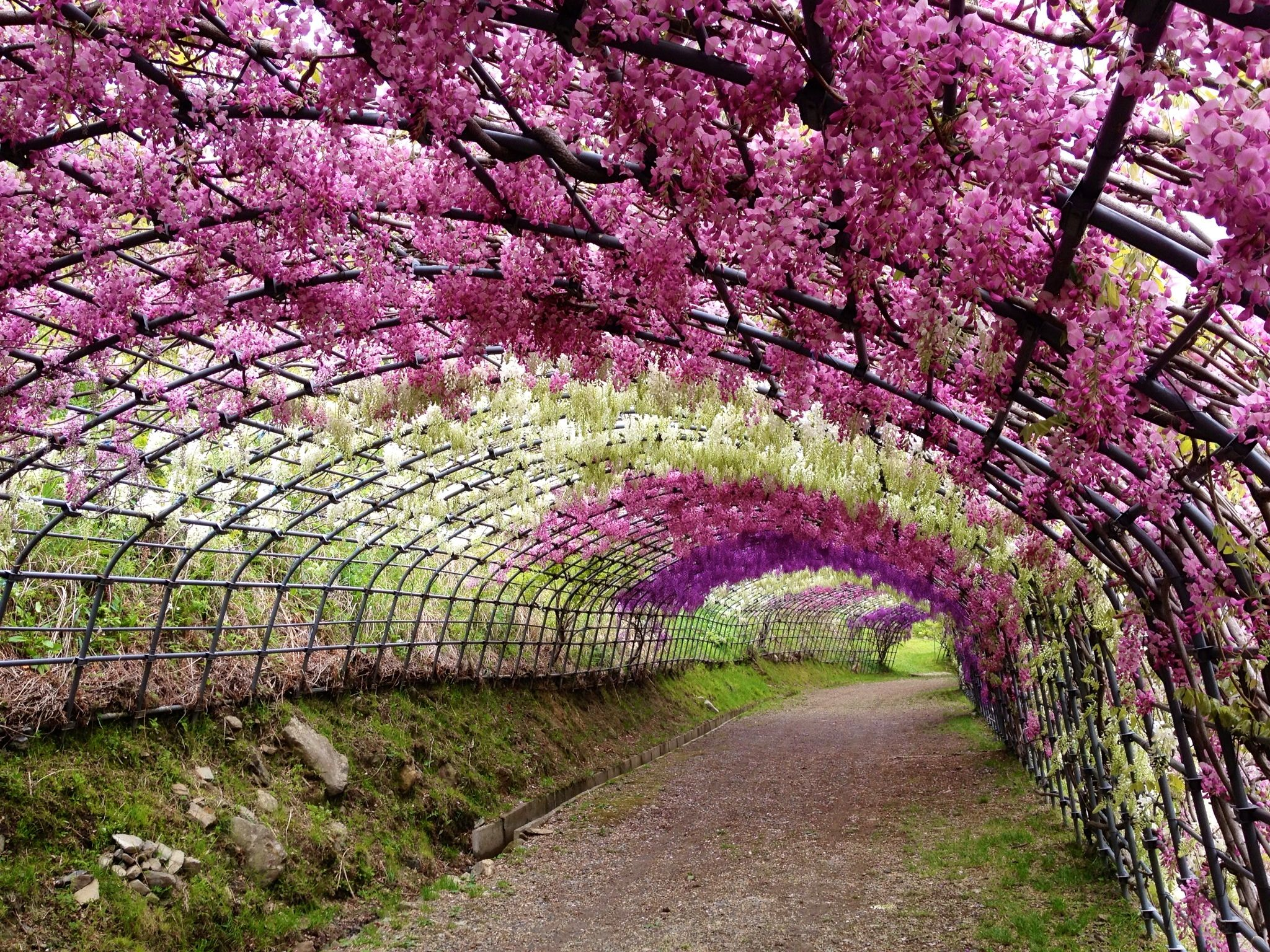 wisteria trellis, I could do this, maybe. Lol