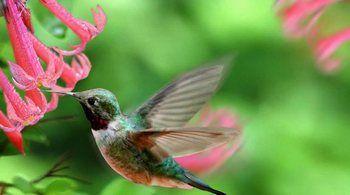 Aves Exóticas: Un Abanico de Vivos Colores