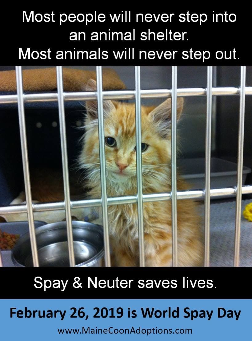Worldspayday Every Year Millions Of Cats Dogs Are Euthanized In Us Animal Shelters Because There Are More Pets Tha Animal Shelter Cats And Kittens Cats