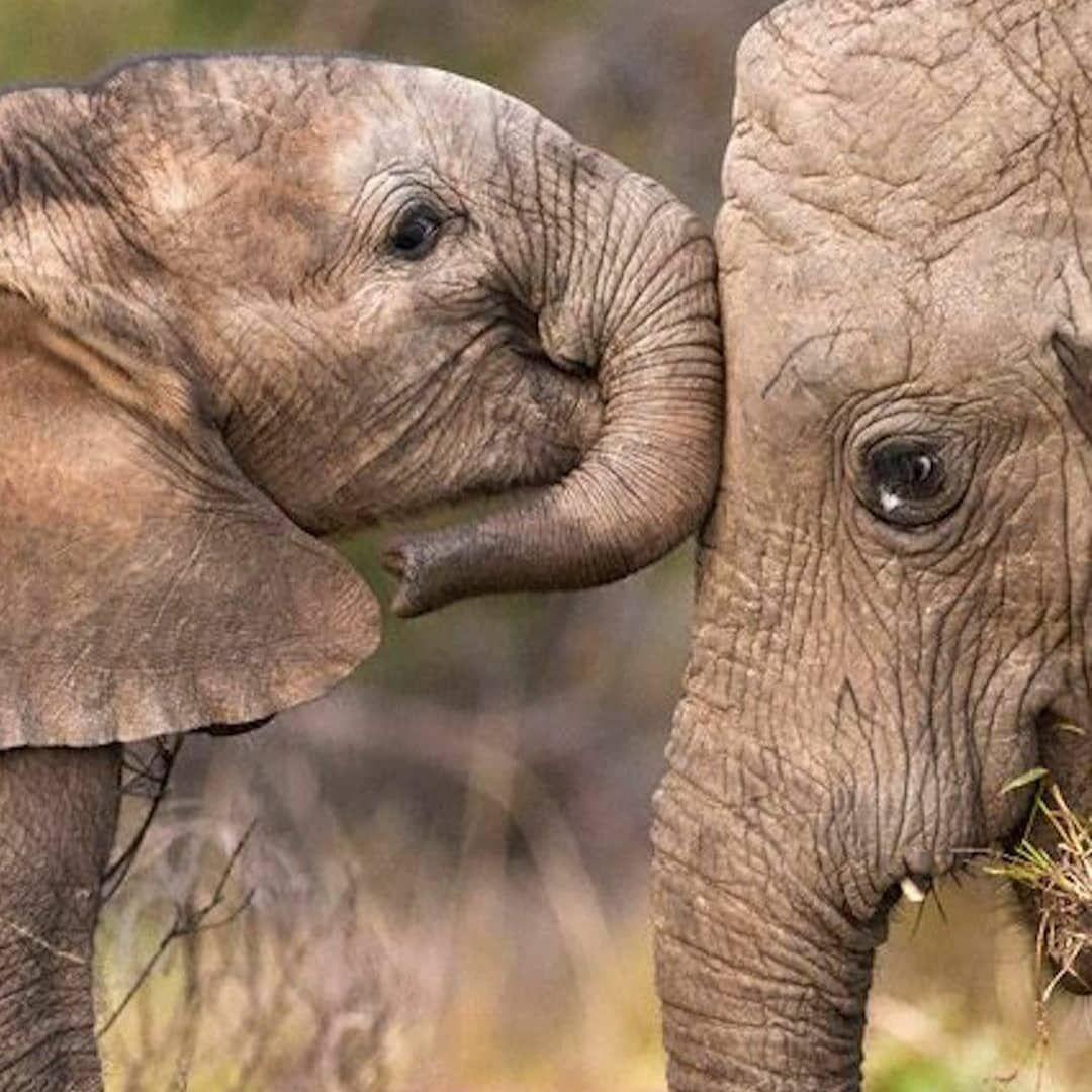 "Photo of @senatorreisen on Instagram: ""Happy mothersday an alle tollen Mütter da draußen!!! #mothersday #spreadthelove #kisses #sharingiscaring #bekind #bekindtoelephants…"""