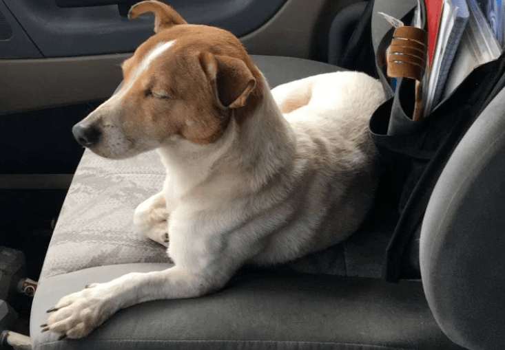 Stray Dog Leads Long Haul Trucker To Injured Rabbit Along Florida Highway Dogs Dog Leads Rescue Dogs
