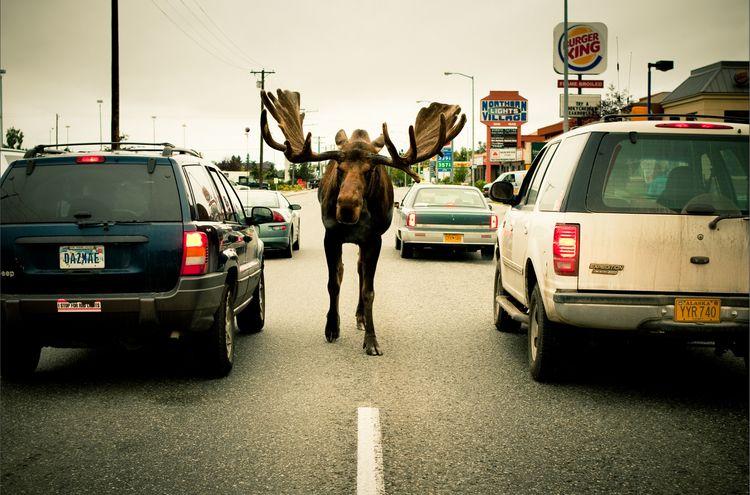 Readers' photos worth a thousand words   Anchorage alaska, North ...