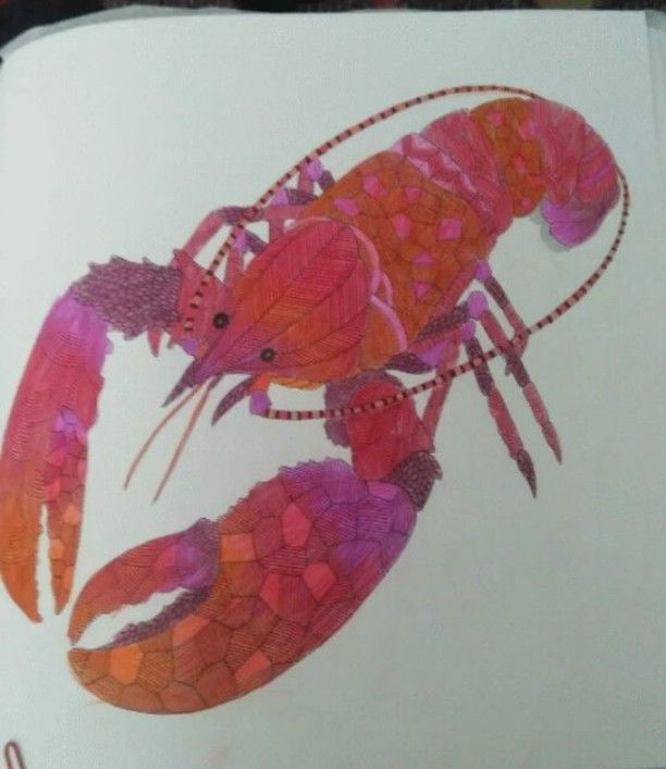 Coloringbookforadults Colorino Coolorngbookbookartmilliemarotta Milliemarottabook Animalkingdomcolouringbook