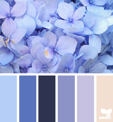hydrangea blues design seeds interior pinterest farben farbpalette und palette. Black Bedroom Furniture Sets. Home Design Ideas