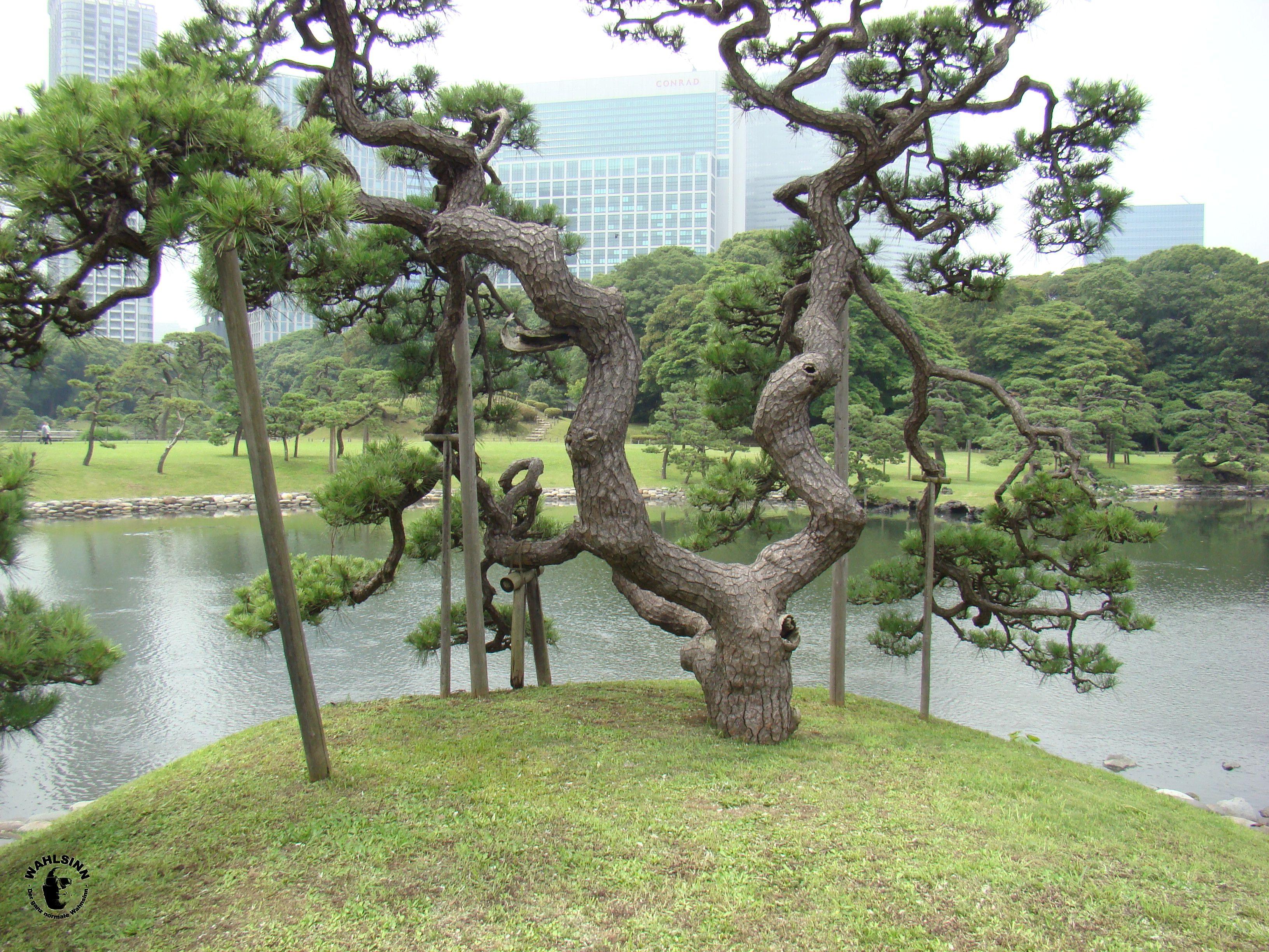 Japan // Tokio - Hamarikyu Gardens