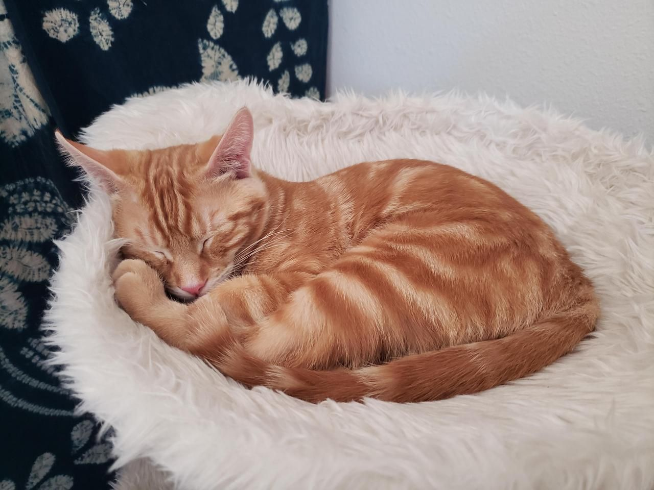 Poor Little Guy Resting After Getting Sick Then Having A Bath By Aj0125 What You Think About Pretty Cats Funny Cat Pictures Excited Animals