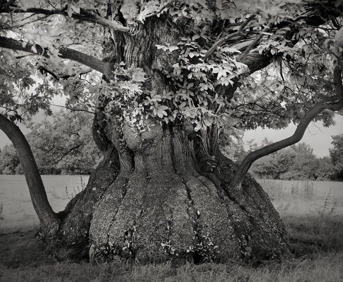 trees so old like the earth by Moon Beth18