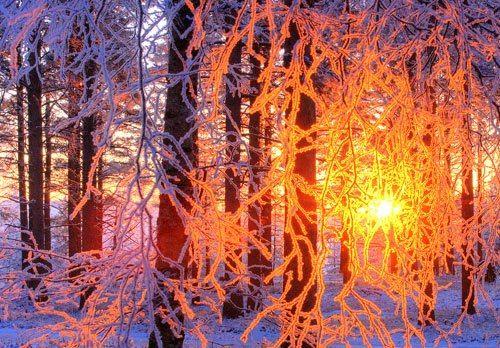 Il sole sorge nelle foreste di Olulu, FINLANDIA