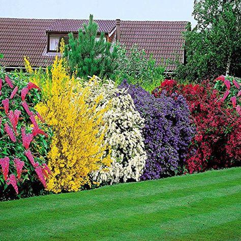 Blühende Hecke - 5 heckenpflanzen Meingartenshop    wwwamazon - heckenpflanzen