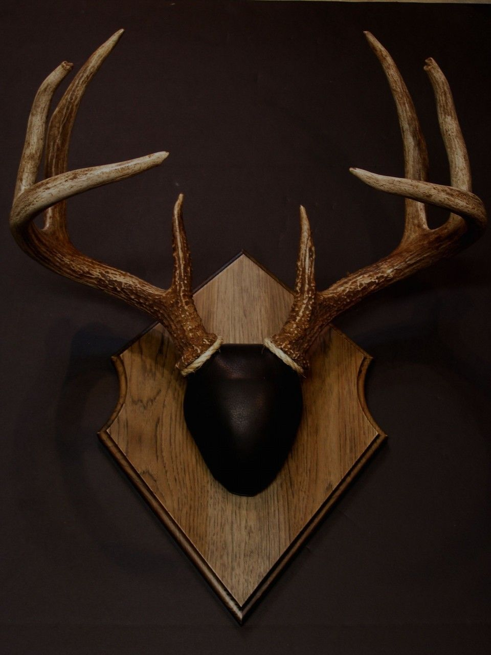 Deer antler mounting kit instructions - Antler Mount Kit Outfitter Deer