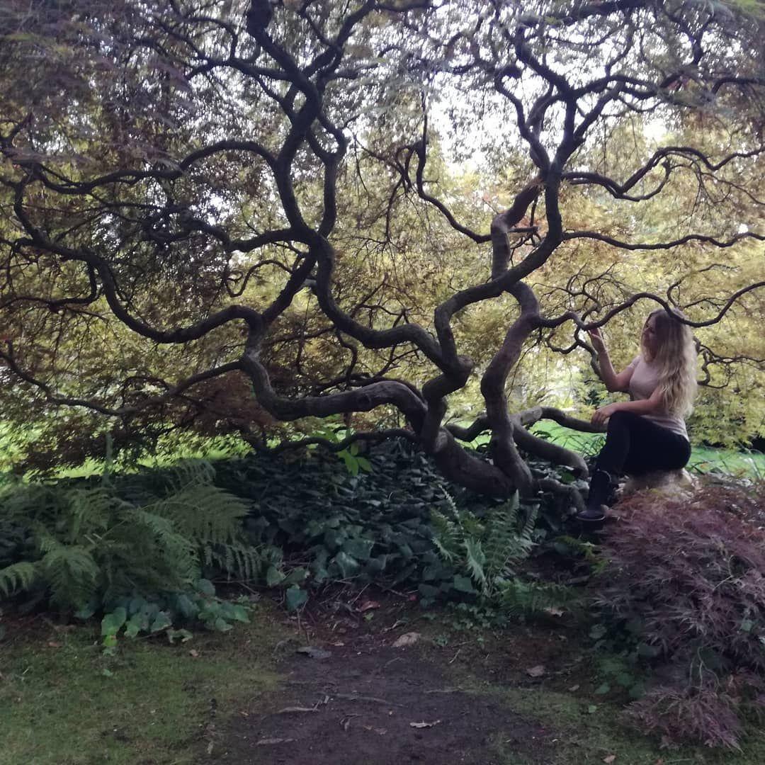 Kleiner Japanischer Garten In Koln Nofilter Japanischergarten Koln Nofilterneeded Baum Baumkrone Japanischer Garten Kleiner Japanischer Garten Garten
