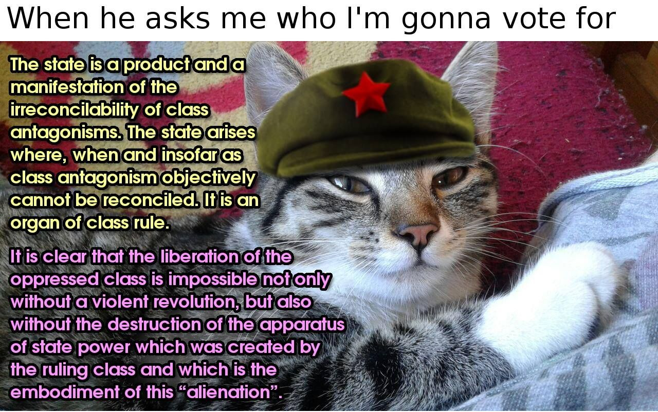 catlove catlover anarchism anarchist meow cat