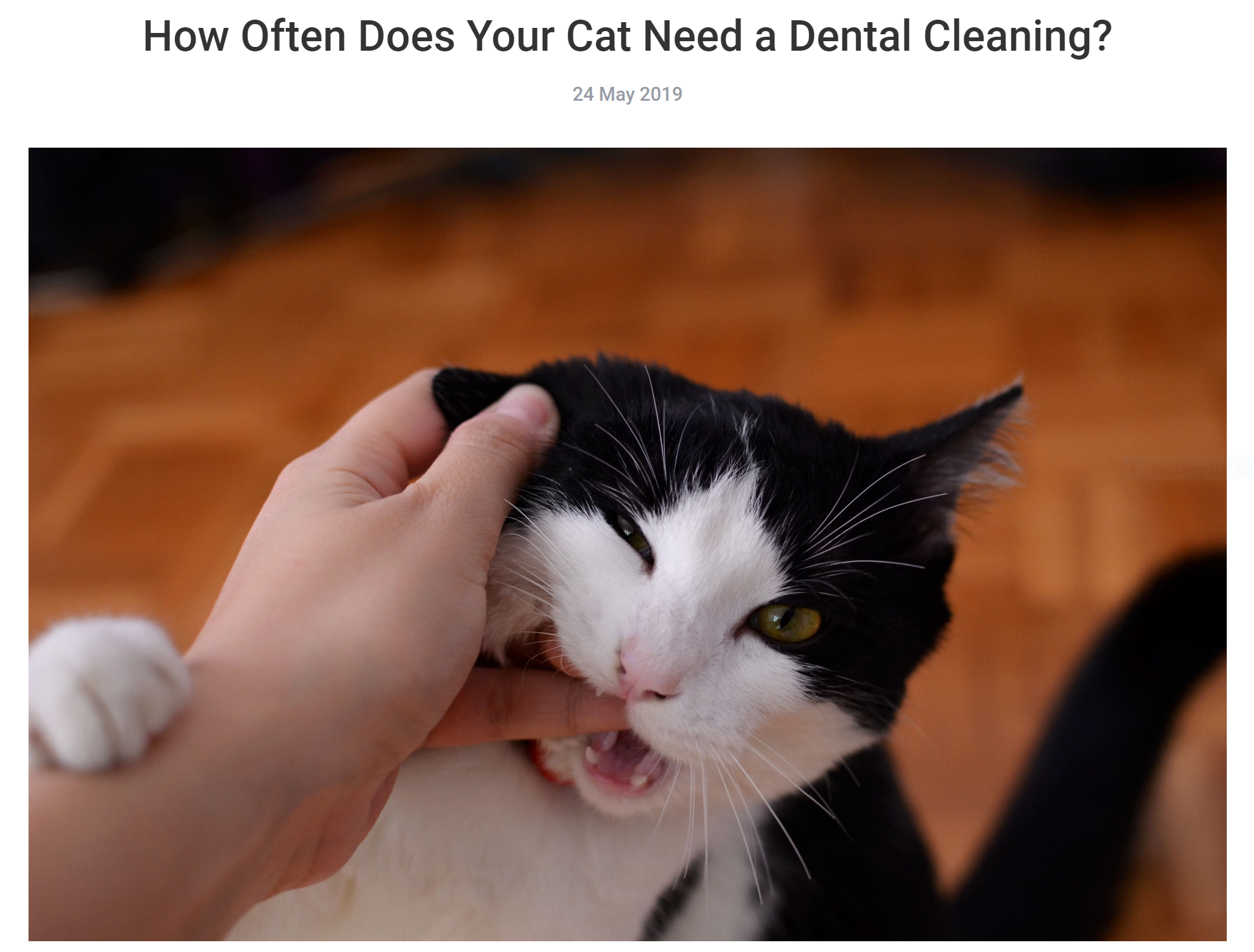 How Often Does Your Cat Need A Dental Cleaning Our Pet Blogs Cat Biting Love Your Pet Day Pet Day