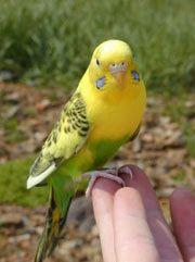 Basic Pet Bird Care Animal Mashups Photoshopped Animals Fake Animals