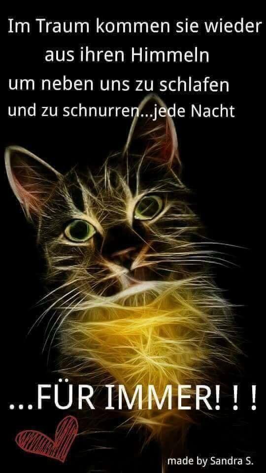 #funnycatshirts