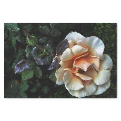 Peach rose tissue paper occasion gifts gift idea diy occasion peach rose tissue paper occasion gifts gift idea diy mightylinksfo
