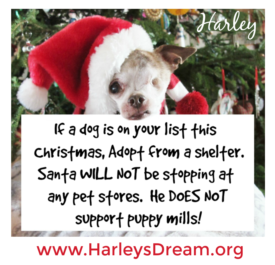 This Message Cannot Be Shared Enough Please Share Shelters Across The Country Will Be Overflowing By March Because Of All The Pup Pets Pet Store Puppy Mills