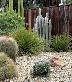 When I first met JJ , and we were comparing notes on our Agave collections, she was adamant that I must visit the Ruth Bancroft Garden. So...