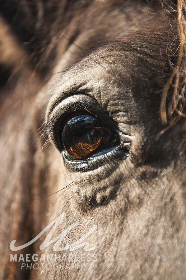 Horse eye series. Taken in England. Animal Photography. | Equine ...