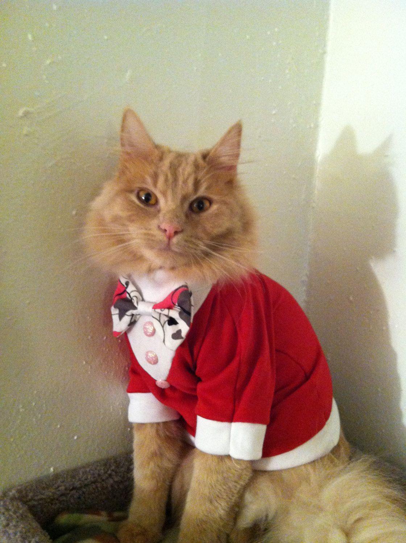 Valentines day tuxedo- cat clothes.  12.50 7e2ac4b8ec84