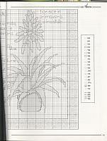 piante grasse con descrizione (3)
