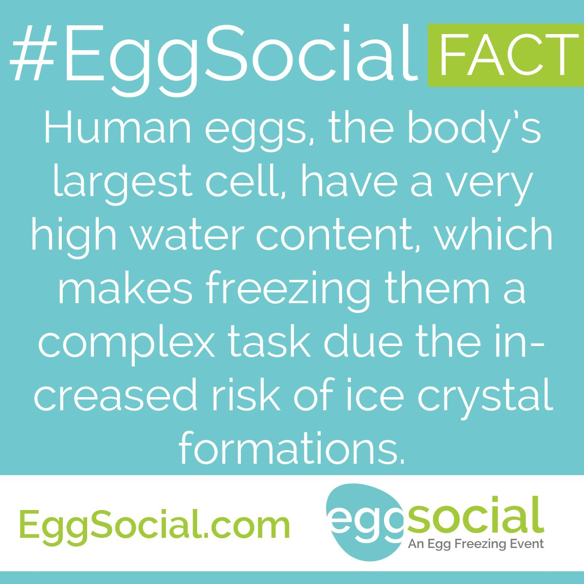 #EggSocial Fact: Human eggs, the body's largest cell, have a very high water content, which makes freezing them a complex task due the increased risk of ice crystal formations.  JOIN OUR NEXT #EggSocial. LIMITED SEATING AVAILABLE. RESERVE YOUR SEAT TODAY: http://eggsocial.com/