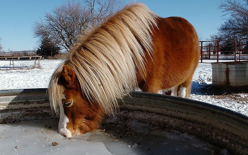 A horse drinks water from a hole in a frozen water tank in Enid, Oklahoma, USA. Record low temperatures were set in at least two Oklahoma ci...