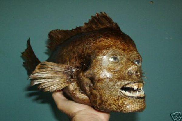 Yikes!-Real Life Mermaid