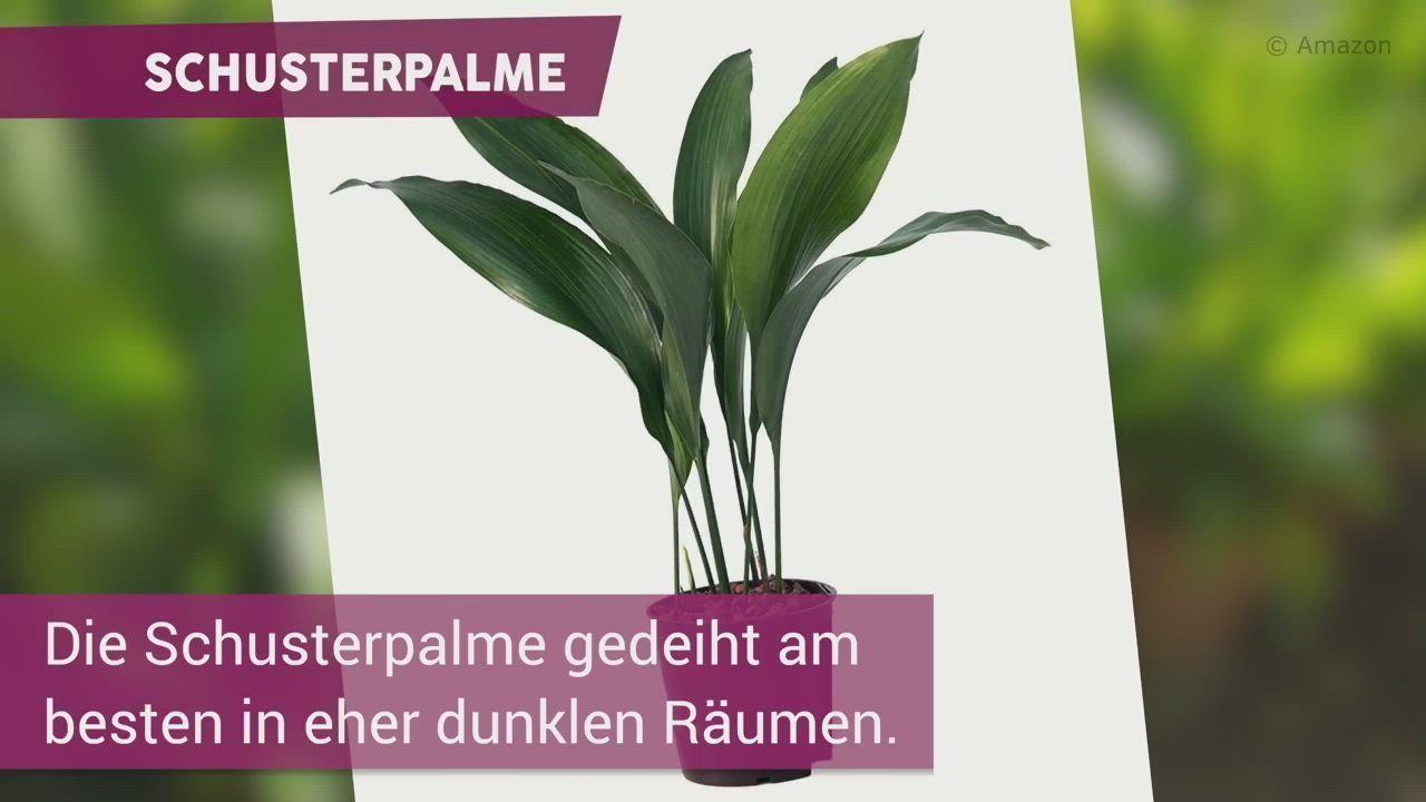 Diese 7 Pflanzen Sind Bestens Furs Bad Geeignet Pflanzen Konnen Jeden Raum Aufwerten Sogar Ein Badezimmer Doch Welche Pflanzen In 2020 Herbs