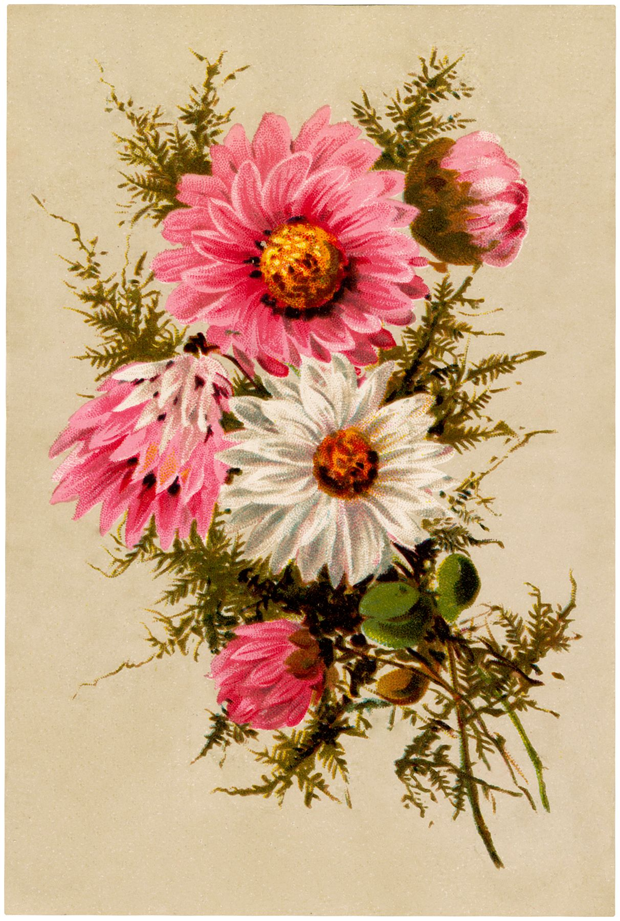 Free Vintage Asters Bouquet Image Vintage Flowers Bouquet Images Graphics Fairy