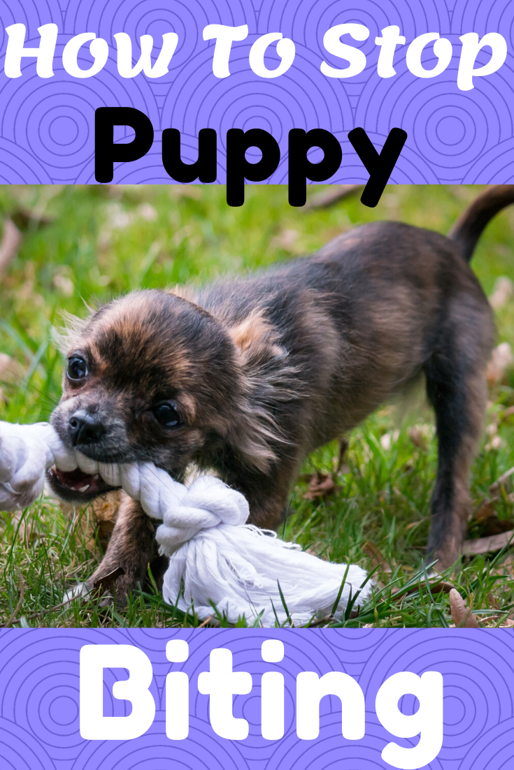 Stop Your Puppy From Biting Fast In 2020 Puppy Biting Puppies Dog Training