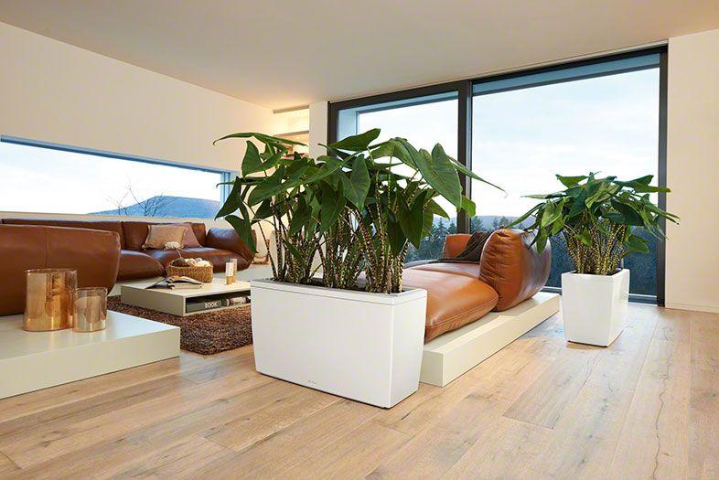 lechuza cararo flowers pinterest flowerpower On topfblumen wohnzimmer