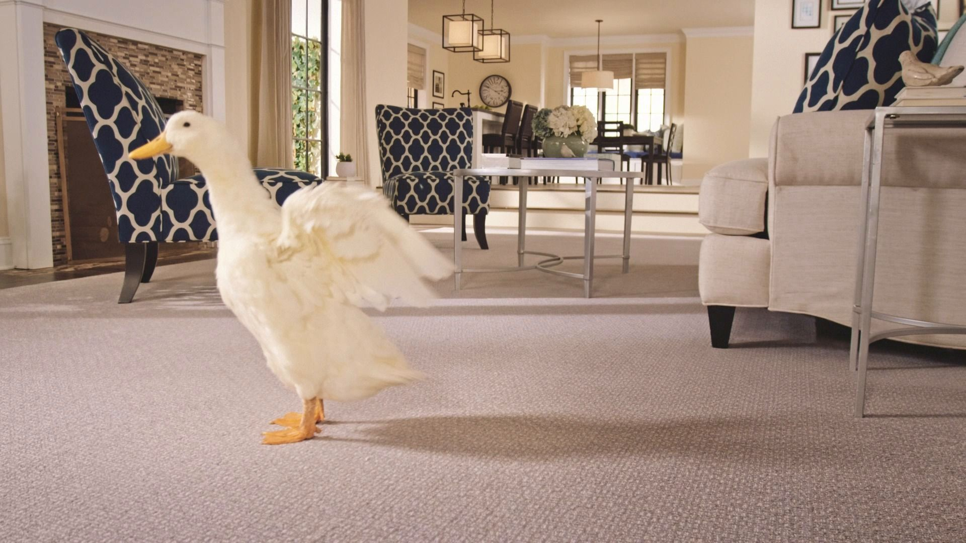 Pet friendly carpet best carpet for pets pet owners mohawk flooring