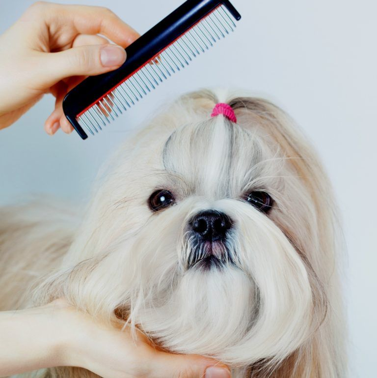 Shih Tzu Grooming Tools See Which Dog Clippers Dog Brushes And Dog Combs Work Best On Shih Tzu Hair Shih Tzu Grooming Dog Brushing Dog Grooming Tools