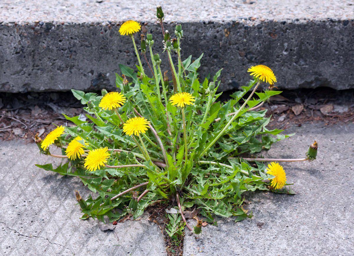 clever landscaping hacks for your bestever yard