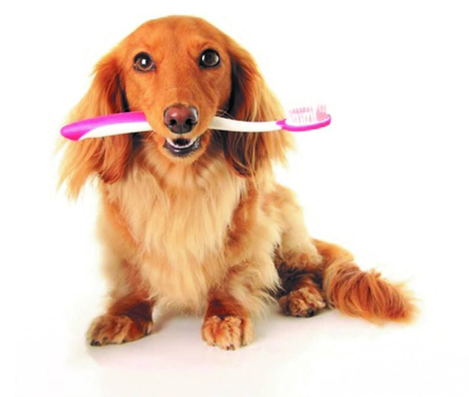 Doggie dental day friday february 1st includes removal