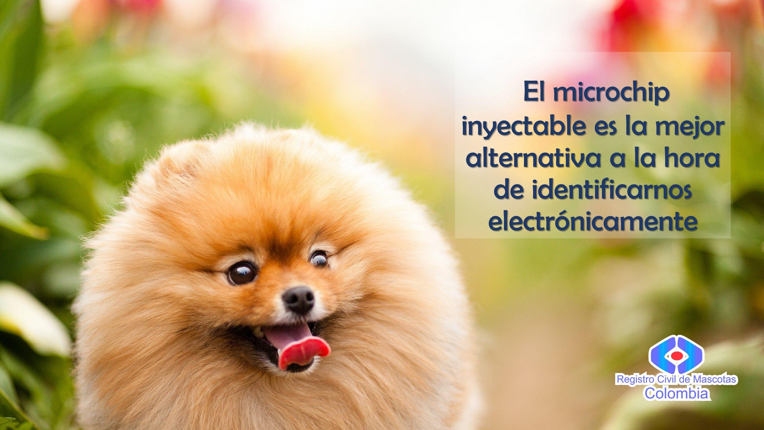 Microchip Con Imagenes Perros Lindos Hocico De Perro Stuffed Animals