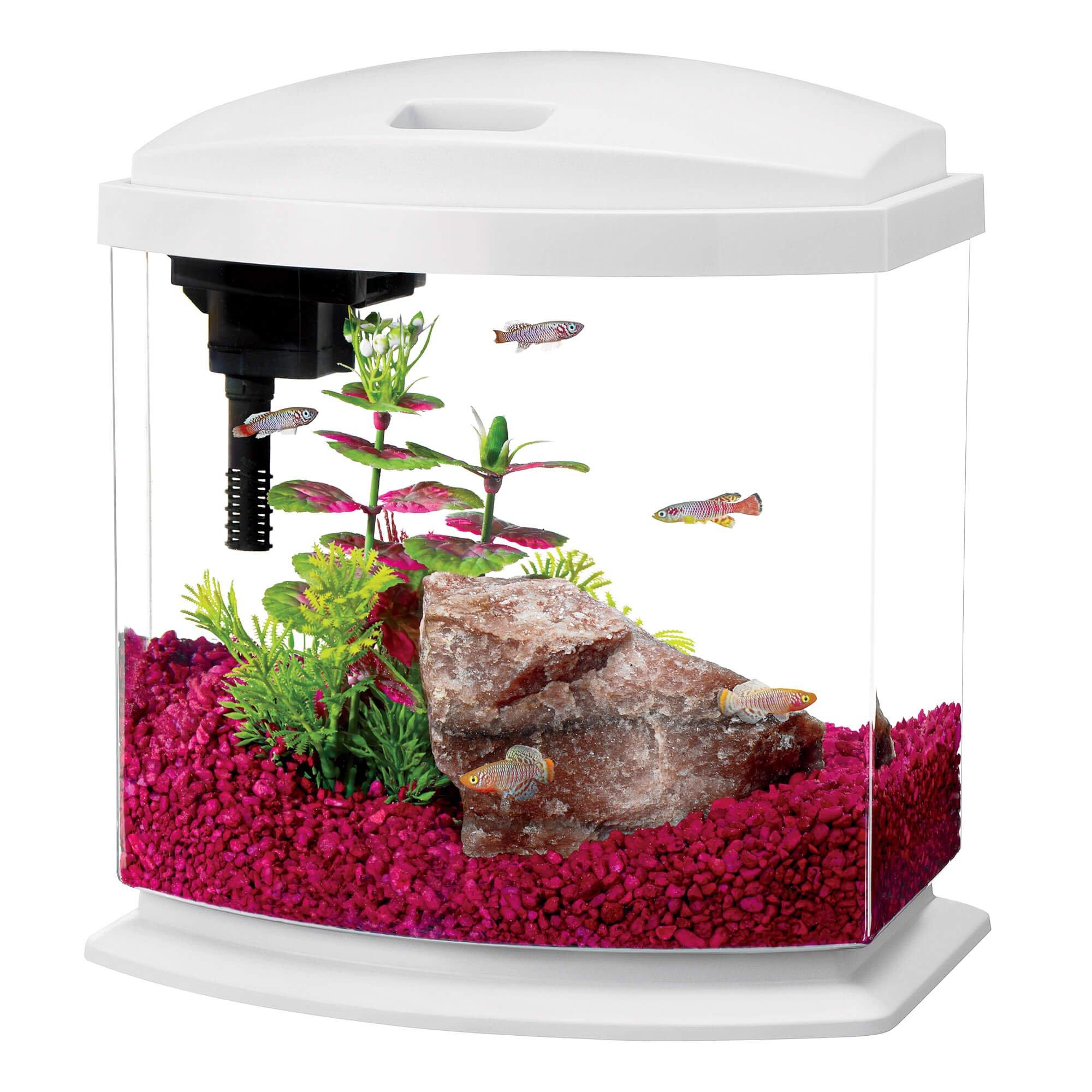 Aqueon 2 5 Gallon Minibow Led Desktop Fish Aquarium Kit White Petco Aquarium Kit Aquarium Fish Tank