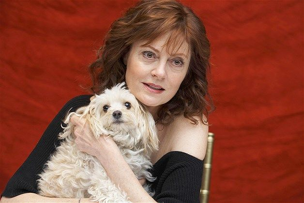 Susan Sarandon Abraza A Su Amado Perro En El Hotel Sheraton De Nueva York Susan Sarandon Perros Actriz Estadounidense