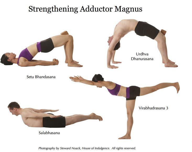 Strengthening Adductor Magnus | Fitness | Yoga anatomy, Yoga fitness