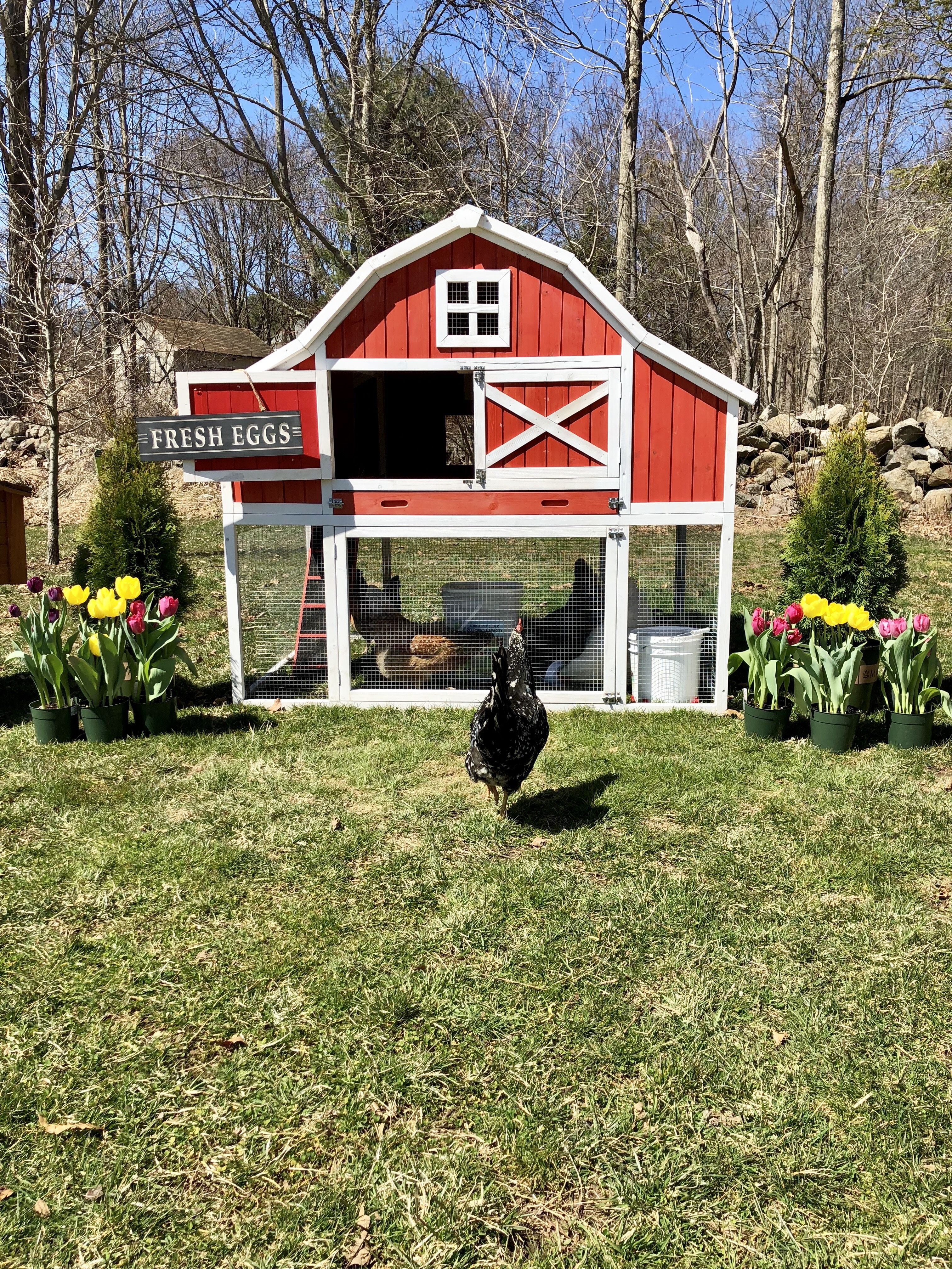The Gambrel Roof Xl Chicken Coop 9 12 Chickens Pet Chickens