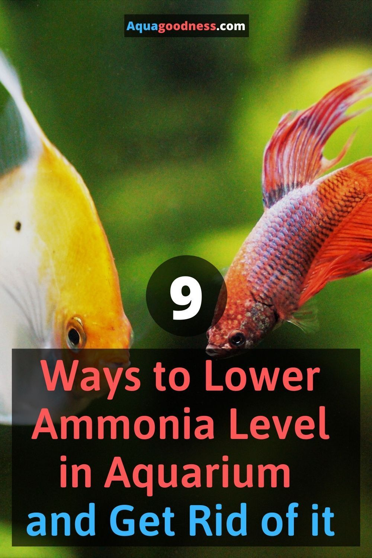 f865caa95e87499efb21557fe4d32e98 - How To Get Ammonia Out Of My Fish Tank