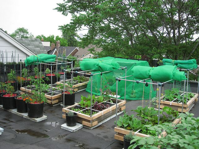 Good View Of Neighbours Roof Tops Vegetable Garden Rooftop And - Rooftop vegetable garden ideas