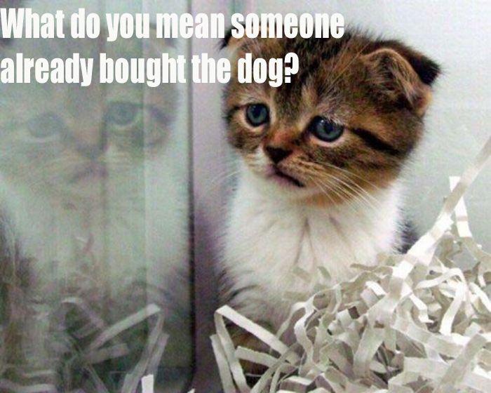 Poor little kitten. #cat #meme #cute #funny #lol | Cute ...