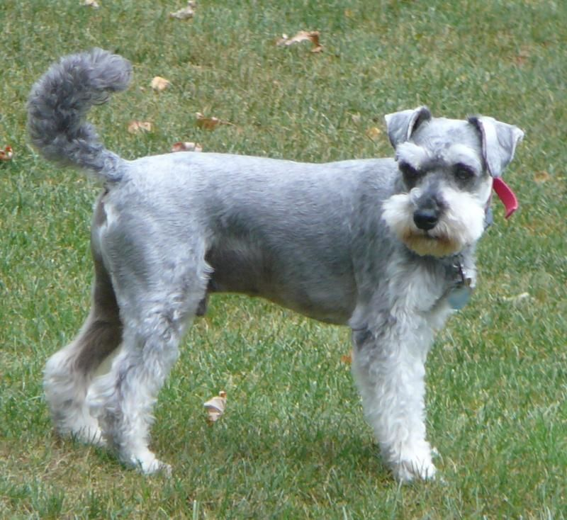 Adopt Scruffy New Info On Cute Cats Dogs Homeless Dogs Kittens Cutest