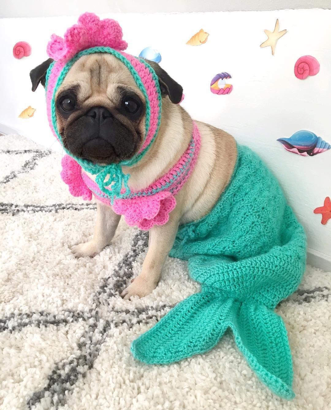 Idea De Carolina Nassi En Moda Disfraces Para Perros Perros Pug