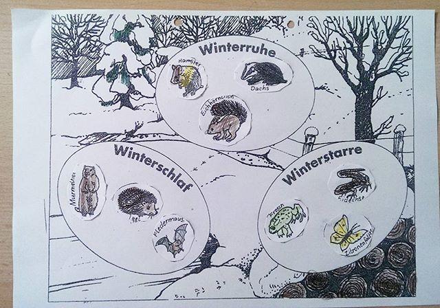 Tiere ihren jeweiligen Überwinterungsarten zuordnen. Zur Hilfe durften sie das Tafelbild nutzen.