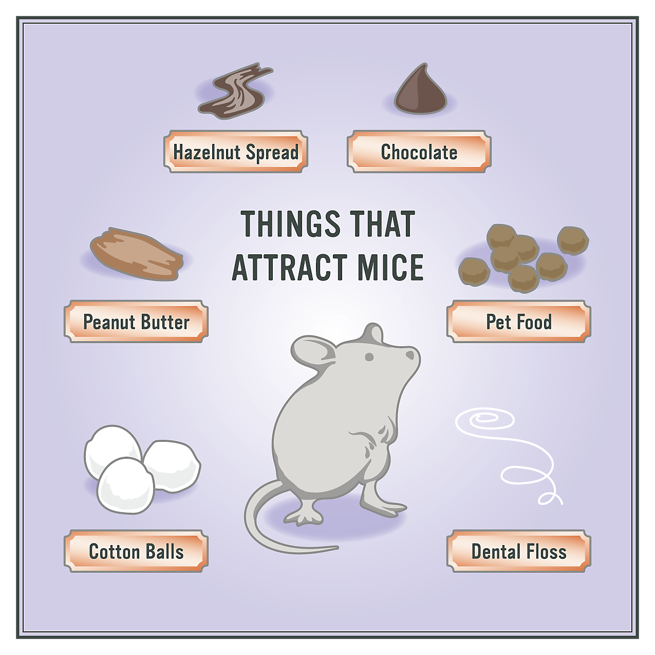 How To Get Rid Of Mice In 5 Easy Steps Getting Rid Of Mice